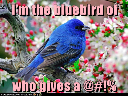 bluebird captions happiness introduction rude who-gives-a-fk