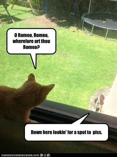 O Romeo, Romeo, wherefore art thou Romeo? Down here lookin' for a spot to piss.