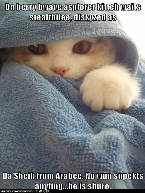 Da berry bwave asplorer kitteh waits stealthilee, diskyzed as Da Sheik frum Arabee. No wun supekts anyfing...he is shure.