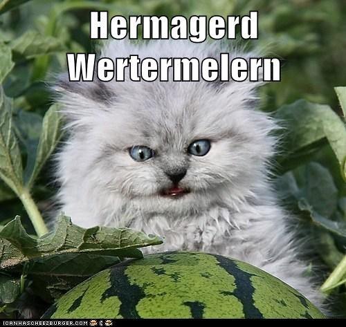 Cheezburger Image 6561595904