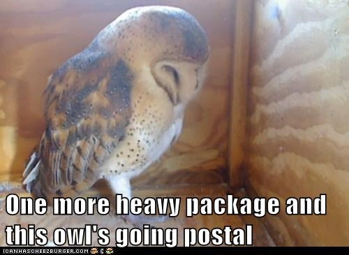angry,delivery,going postal,heavy,hedwig,Owl,package,work