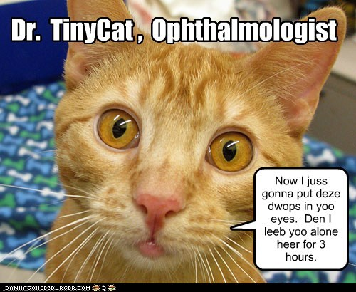 Dr. TinyCat , Ophthalmologist Now I juss gonna put deze dwops in yoo eyes. Den I leeb yoo alone heer for 3 hours.