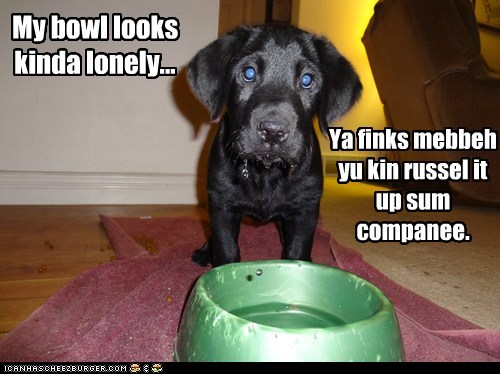 My bowl looks kinda lonely... Ya finks mebbeh yu kin russel it up sum companee.