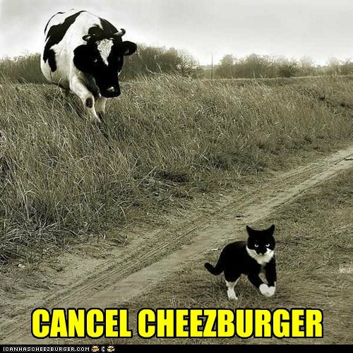 Cheezburger Image 6561769728