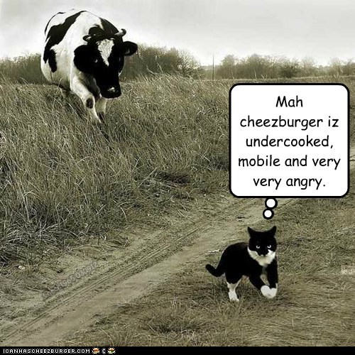 angry cat chasing cheezburger cow mobile ordering rare undercooked