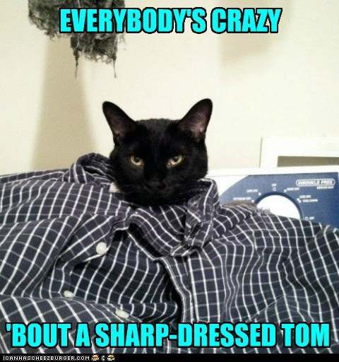 captions,cat,fashion,oh you fancy,sharp dressed man,tom,tomcat