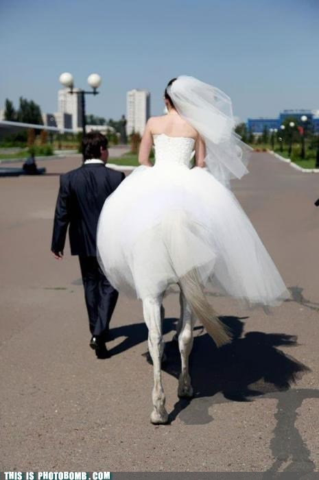 horse,Perfect Timing,wedding