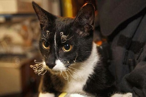 bad hair day,cat saved from burning bu,cat saved from burning building,morning fluff