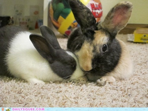 Bunday,bunny,pet,rabbit,reader squee,snuggles