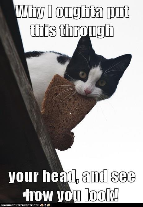 bread captions Cats face head inbread revenge - 6562227968