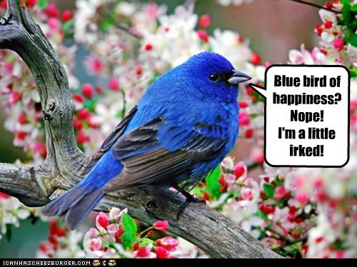 Blue bird of happiness? Nope! I'm a little irked!