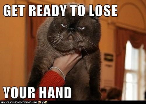 angry captions Cats grumpy hand lose warning - 6562544896