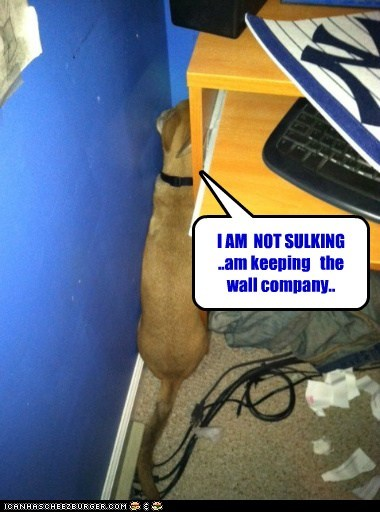 company,dogs,feeling blue,sulking,wall,what breed