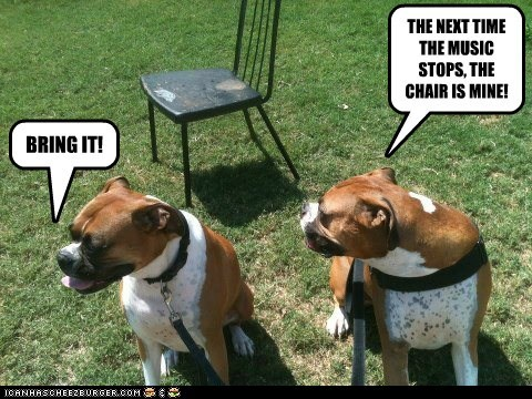 dogs boxer musical chairs game bring it