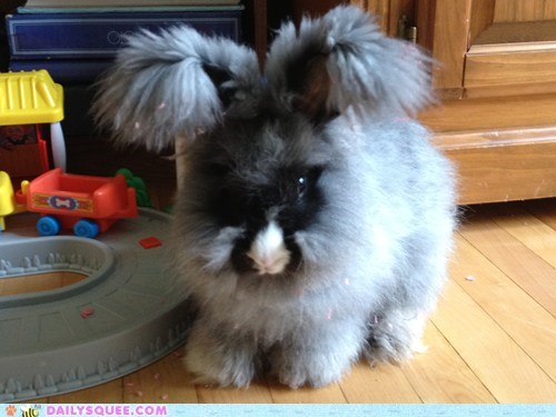 angora bunny Fluffy happy bunday pet rabbit reader squee - 6562800384