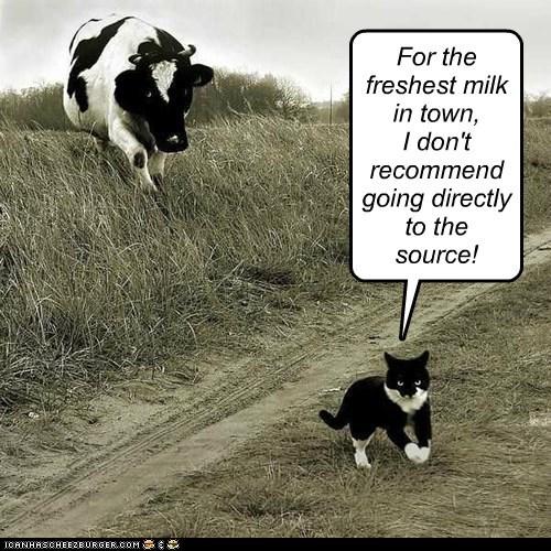 freshest milk in town
