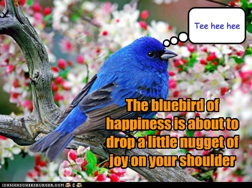 The bluebird of happiness is about to drop a little nugget of joy on your shoulder Tee hee hee