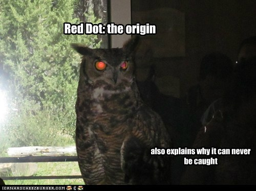 caught,explains,laser,origin,Owl,red dot