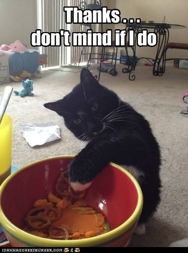 Lolcats - snack - LOL at Funny Cat Memes - Funny cat pictures with words on  them - lol | cat memes | funny cats | funny cat pictures with words on