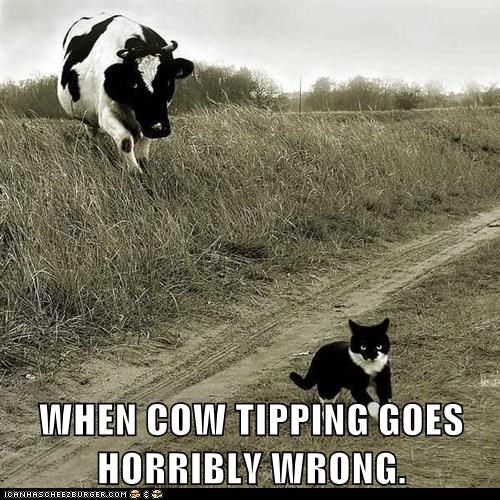 captions,Cats,chasing,cow,cow tipping,revenge,wrong