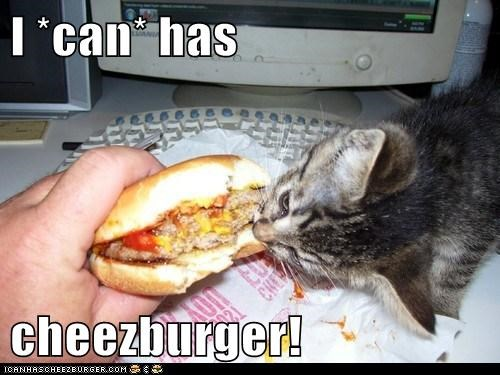 Cheezburger Image 6563237376