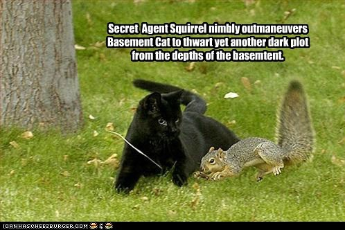 basement cat,cat,dark,maneuver,plot,running,secret agent,squirrel