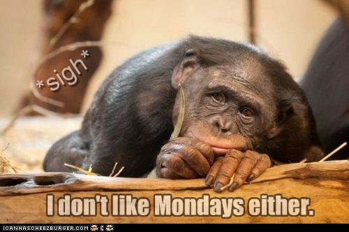 *sigh* I don't like Mondays either.