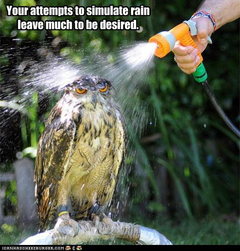 annoyed,attempt,frustrated,hose,Owl,rain,shower,simulation