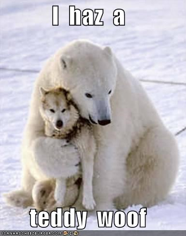 hugging love polar bears snow white - 656337664