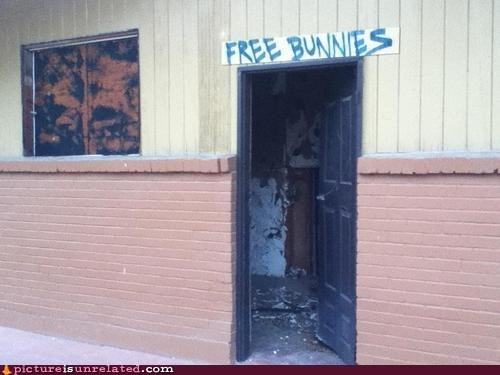 bunnies,seems legit
