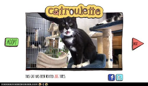 adoption catroulette Cats chatroulette cool sites - 6563492352