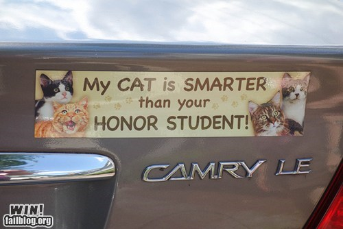Cats honor student kitteh kitty license plate - 6563523328