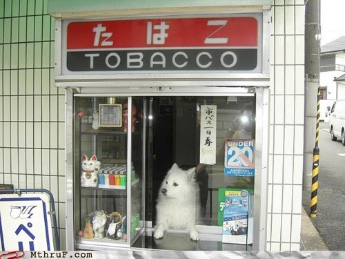 business dog,cigarette stand,tobacco