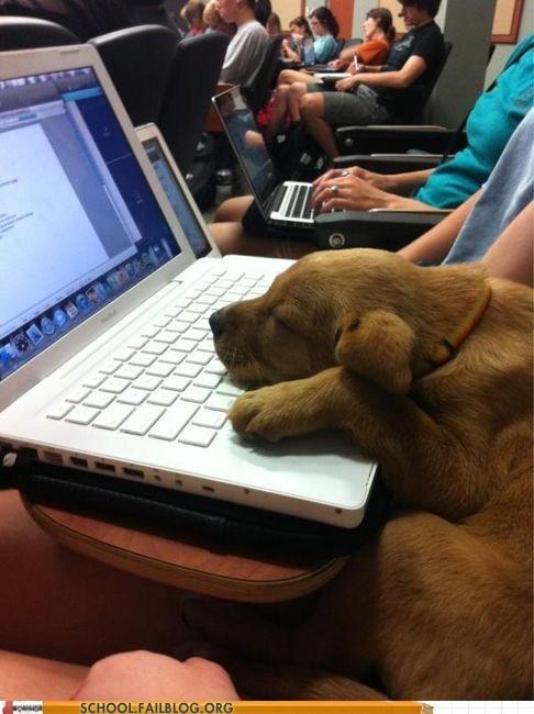 dogs sleeping in class - 6563638272