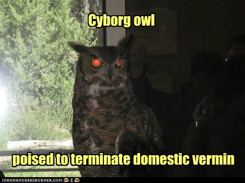 cyborg,domestic,evil-terminate,Owl,red eyes,vermin