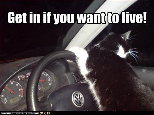 captions,car,Cats,danger,drive,escape,get in,live