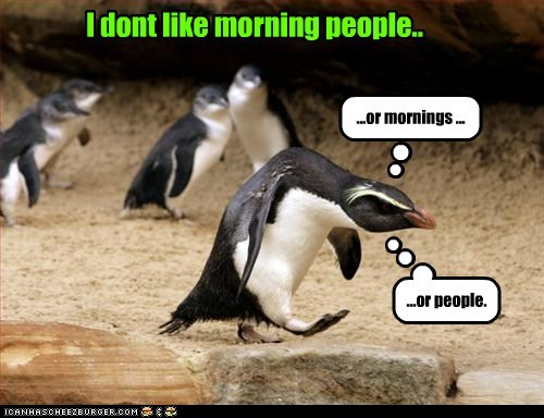 angry,captions,dont-like,grumpy,hunched over,morning people,mornings,penguins,people