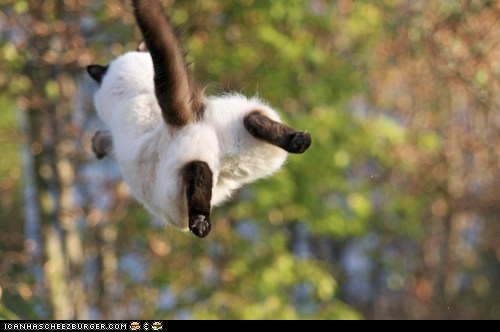 Cheezburger Image 6563925504