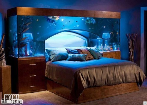 aquabed,aquarium,bed,best of week,design,Hall of Fame