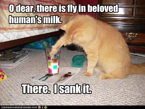 O dear, there is fly in beloved human's milk. There. I sank it.