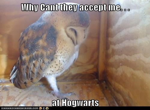 acceptance,captions,Harry Potter,Hogwarts,mail,Owl,Sad