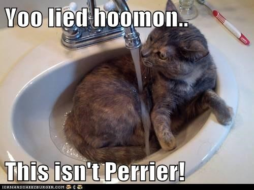 captions,Cats,fancy,human,lie,oh you fancy,perrier,sink