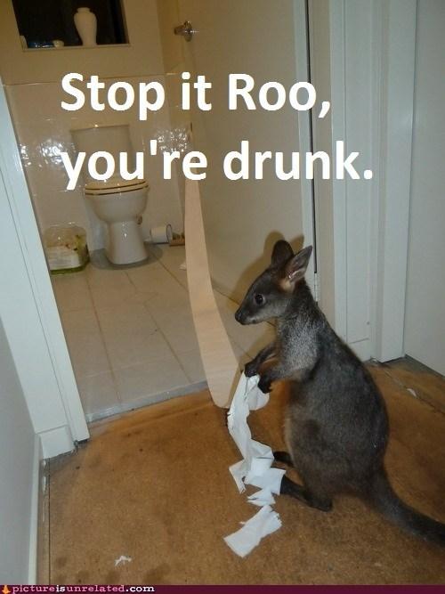 drunk,kangaroo,mess,pet,toliet
