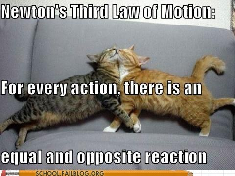 opposite reaction physics of lolcats third law of motion - 6564461056