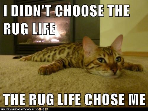 captions,Cats,chose,i-didnt-chose,pun,rug,thug life