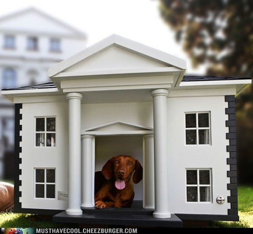 dogs fancy house mansion - 6564706560