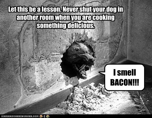 bacon cooking delicious dogs lesson smell the killer shrews - 6564726016