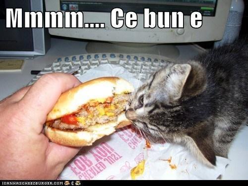 Cheezburger Image 6564828928