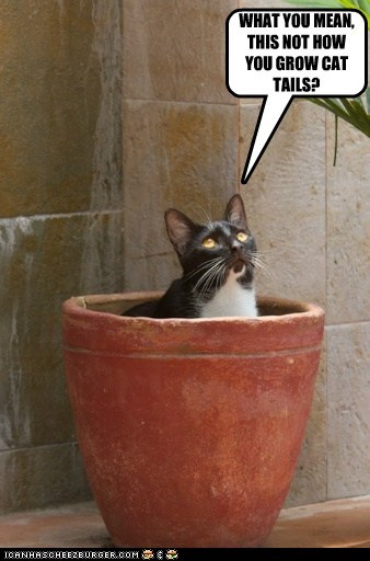captions cat tail Cats grow plant pot