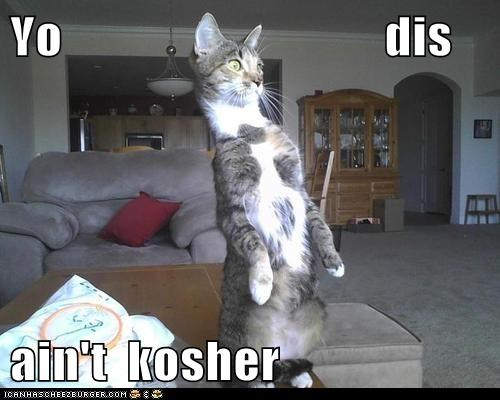 captions Cats ew kosher nope omg - 6565024512